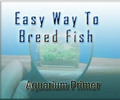 Thumbnail Guide To Breed Fish In Aquarium With Private Label Right